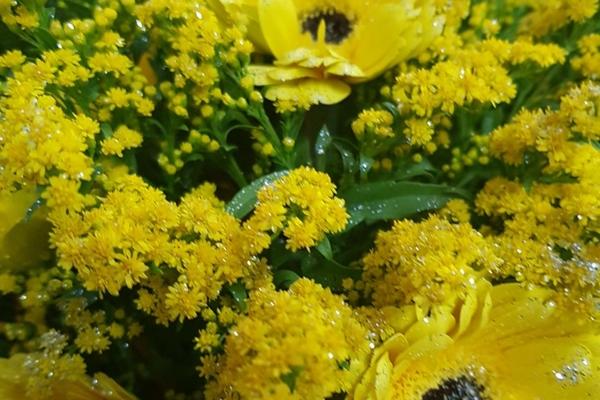 tutto-bello-floricultura-219850DF95-528D-2BE0-5A75-23503A6D1869.jpg