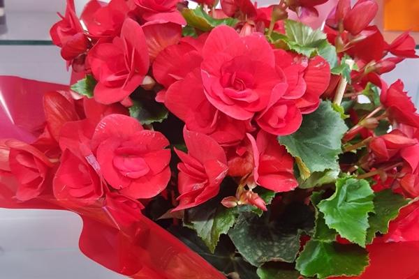 tutto-bello-floricultura-22AFF7FBEB-6A11-8F84-0C3D-8A92EF2A6116.jpg