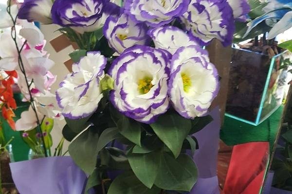 tutto-bello-floricultura-23C30F89F0-9BE5-1410-E153-5A836C998A2D.jpg