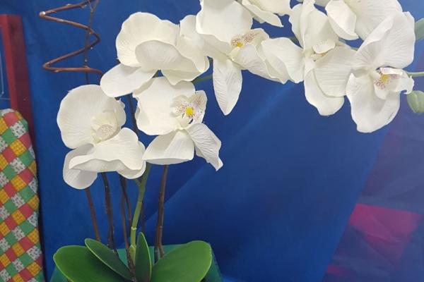 tutto-bello-floricultura-29FD48DB0D-64B5-4505-77C1-C8F3A5080E81.jpg