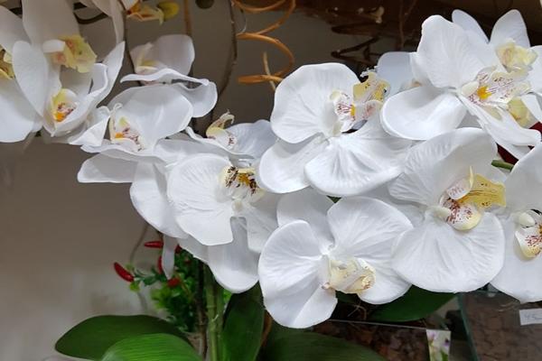 tutto-bello-floricultura-403ACD237A-518B-32F8-1412-1E189C80B0C8.jpg
